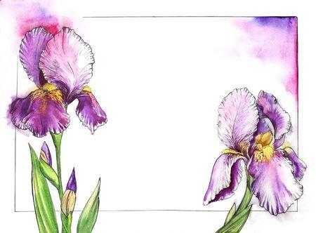 Cadre floral aquarelle pour texte avec des iris tendres sur les côtés. Fond blanc avec cadre noir fin. Belles fleurs élégantes de nuances violettes avec des noyaux jaunes et un lilas délicat qui brille autour
