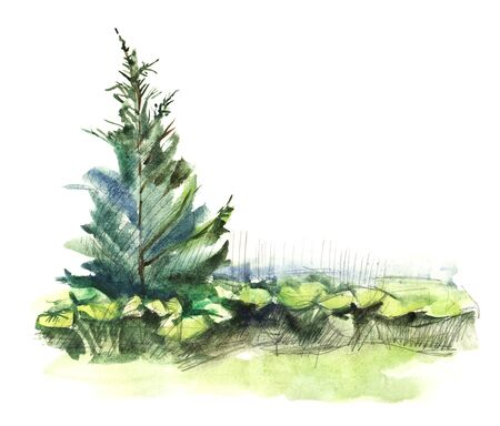 Watercolor sketch of summer landscape. Pine tree and blurry vegetation as green island isolated on white background. Abstract hand drawn illustration. Element of wild nature fauna 版權商用圖片