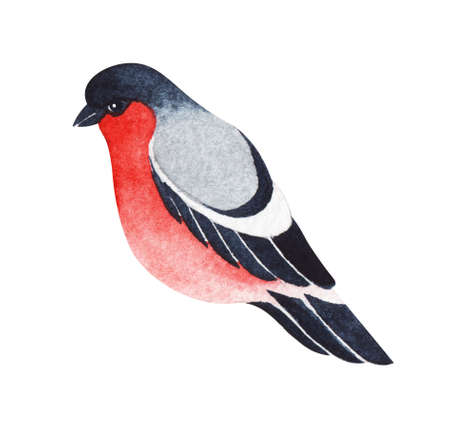 Watercolor image of cute cartoon bullfinch isolated on white background. Hand drawn illustration of bright winter bird. Decorative Christmas element for scrapbooking