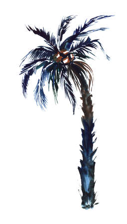 Watercolor image of single coconut palm isolated on white background. Tropical tree with thick wide leaves on top, shaggy bent trunk and ripe fruit. Hand drawn botanical illustration