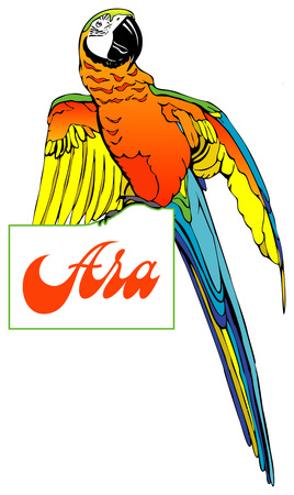 bright colorful parrot sitting on the letters