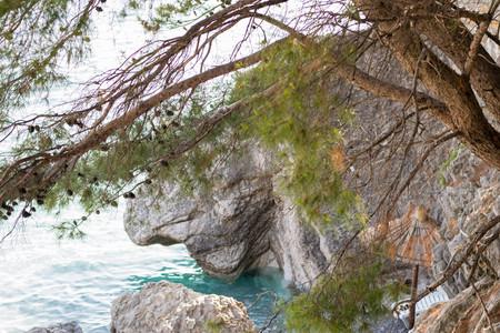 Mediterranean pines -  Pine Wood