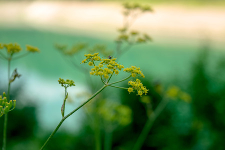 Yellow wildflowers near the lake