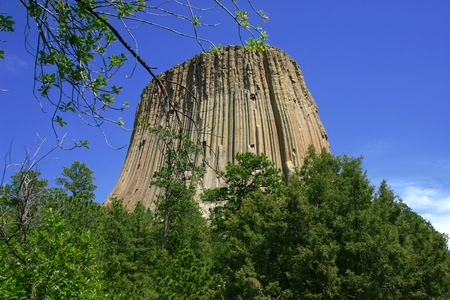 Devils Tower with Branch Stock Photo - 12331079