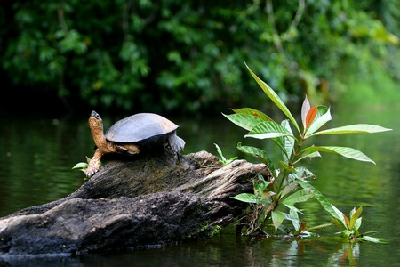 Turtle and Plant Strech for the Sun