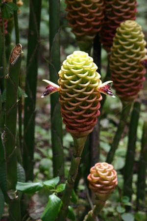 Ginger Blossom ruche avec pétales Banque d'images - 12330958