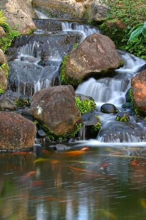 A small man made waterfall and pond full of Koi on the Hawaiian Island of Kauai Banco de Imagens