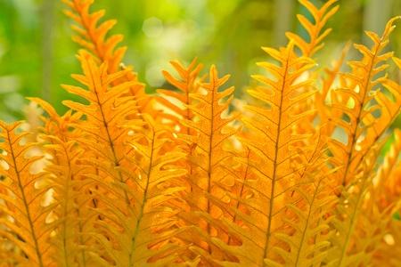 Golden fern Stock Photo - 11060573