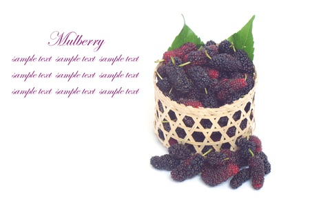 Mulberry on white background photo