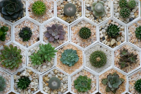 cactus variety photo
