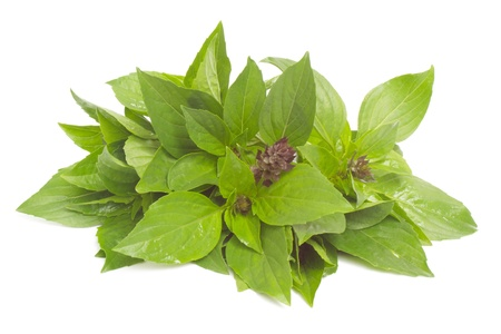 linn: Thai Basil isolated on white background  Stock Photo