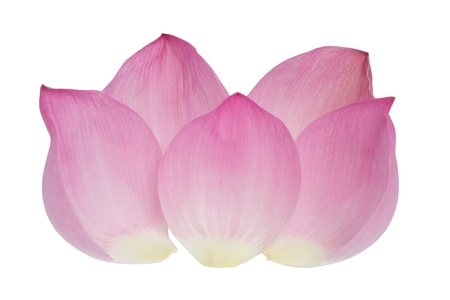Petal of the pink lotus isolated on  white background Stock Photo - 14478878
