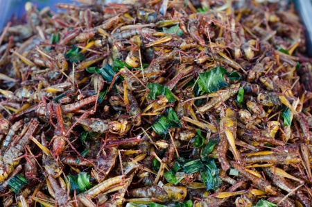 A pile of deep fried grasshoppers  photo