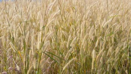 scrub grass: grass background
