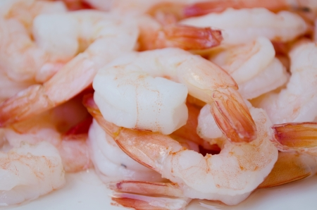 shrimp background photo
