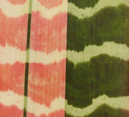 bromeliad: Close up bromeliad leaf texure Stock Photo