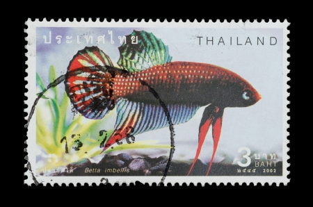 THAILAND - CIRCA 2002  A postage printed in Thailand show image of Thai fish name Betta imbellis from the series  Fighting Fish , circa  2002 photo
