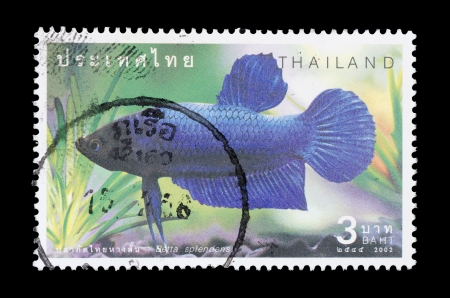 humbug: THAILAND - CIRCA 2002  A postage printed in Thailand show image of Thai fish name Betta splendens  from the series  Fighting Fish , circa 2002 Stock Photo