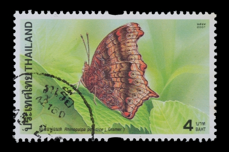 THAILAND - CIRCA 2001  A postage printed in Thailand show image of Rhinopalpa polynice from the series  Butterflies , circa 2001 photo