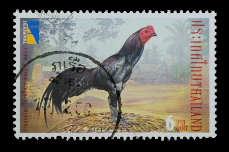 THAILAND - CIRCA 2001  A postage printed in Thailand show image of fighting cock from Thailand Philatelic Exhibition 2001 Stamps, circa 2001 photo