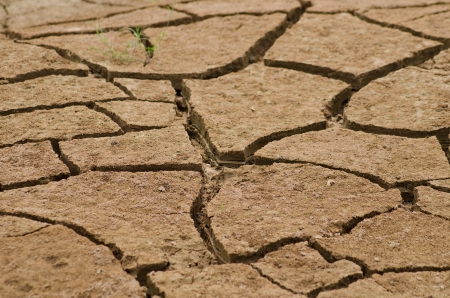 Cracked by the heat long life less soil photo
