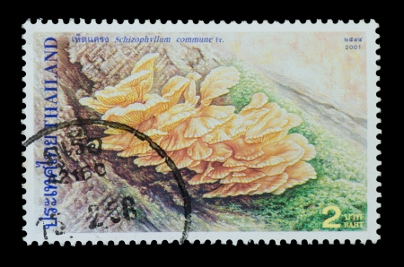 THAILAND - CIRCA 2001  A postage printed in Thailand show image of Schizophyllum commune  from the series  Mushrooms , circa  2001 photo