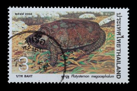 THAÏLANDE - CIRCA 2004, un timbre-poste imprimé Thaïlande show image de Platysternon megacephalum à partir de la série Tortue, vers 2004
