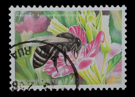 TAILANDIA - CIRCA 2000 Un franqueo impreso en la imagen de muestra Tailandia Apis andreniformis desde la serie Bee, circa 2000