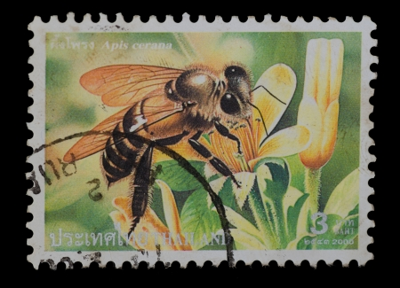 THAILAND - CIRCA 2000  A postage printed in Thailand show image of Apis cerana from the series   Bee  , circa  2000 photo