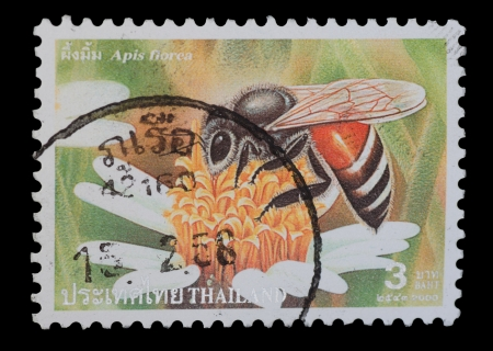 florae: THAILAND - CIRCA 2000  A postage printed in Thailand show image of Apis florae from the series   Bee  , circa  2000