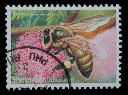 apis: THAILAND - CIRCA 2000  A postage printed in Thailand show image of Apis dorsata from the series   Bee  , circa  2000 Stock Photo