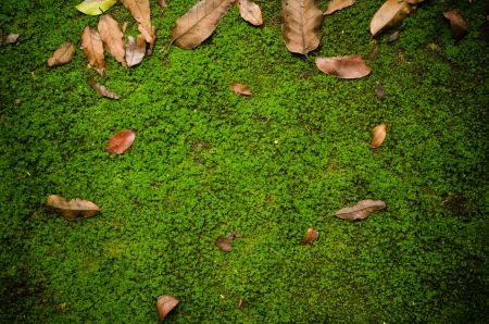 Ground path with moss photo