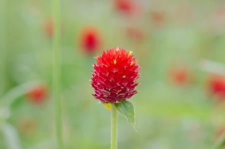 amaranthine: Bloom amaranthine