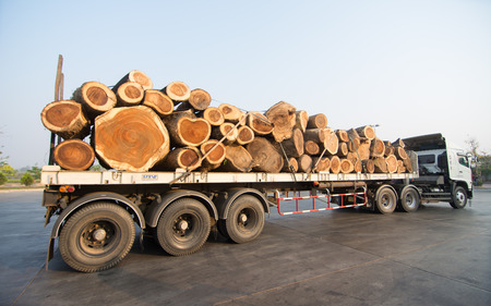 ไม้ Loei  March 02: This image show Large truck transporting wood 02, 2014 in Loei, Thailand