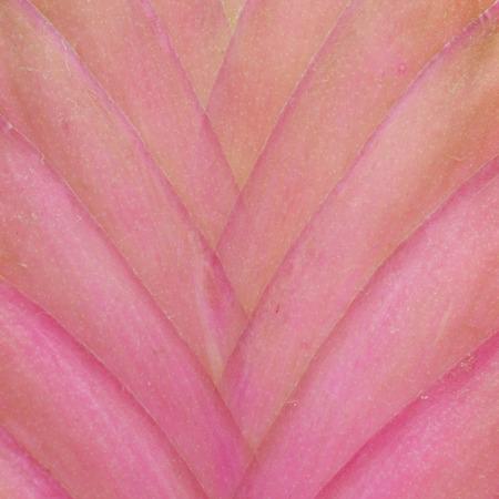 tillandsia: Details of  Tillandsia flower
