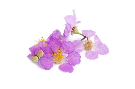 annonaceae: Cananga odorata isolated on white background Stock Photo