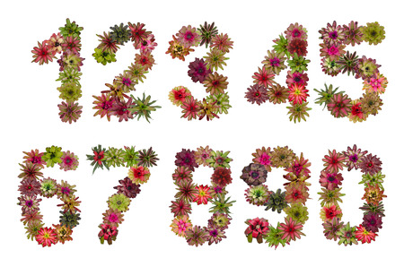 Numbers of bromeliad flowers  A set Stock Photo - 28755830