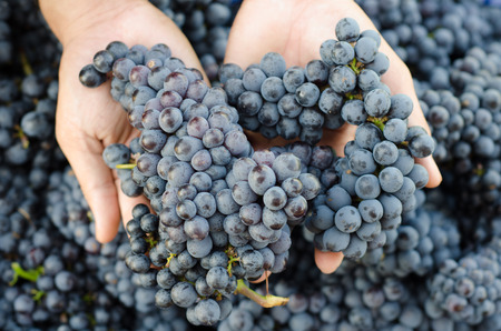 hands with grapes