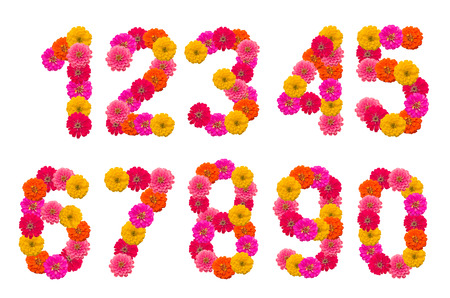 Numbers of  Zinnias flowers  A set photo