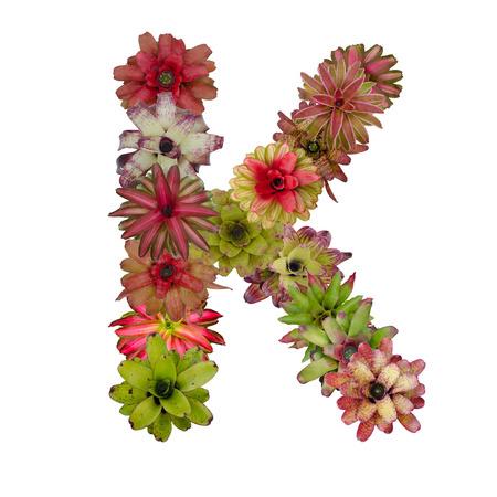 neoregelia: bromeliad flower letter Stock Photo