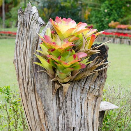 bromeliad: bromeliad growing on stump