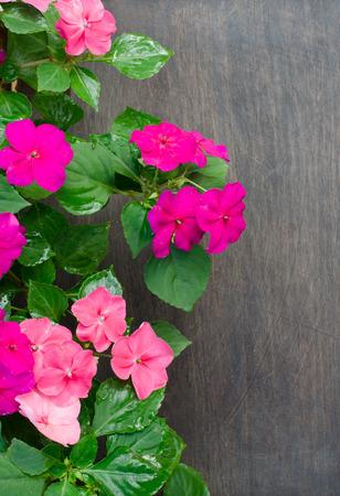 impatiens: Impatiens flower on wooden background Stock Photo