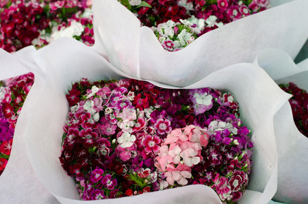 dianthus: Dianthus chinensis (China Pink)  in flower market, Thailand Stock Photo