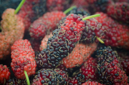 mulberry: Close up organic mulberry, vintage mulberry Stock Photo