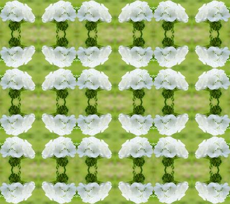 cranesbill: geraniums seamless pattern background Stock Photo