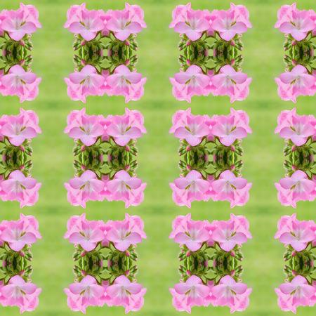 cranesbill: Pink bicolor geraniums seamless pattern background
