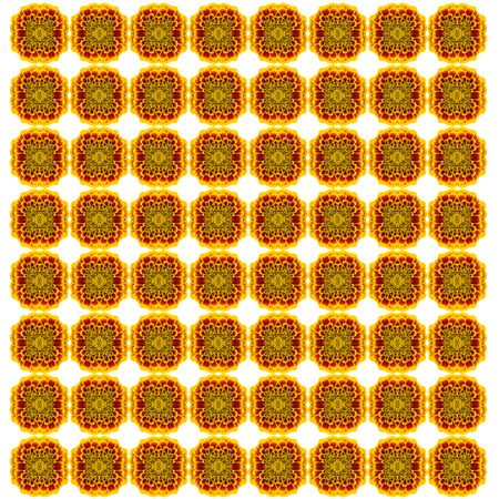 patula: French marigolds seamless pattern background