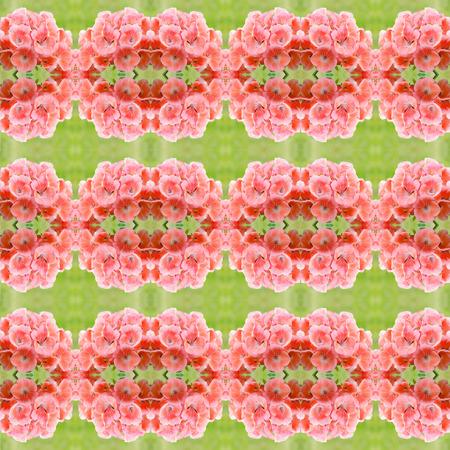 cranesbill: bicolor geraniums seamless pattern background