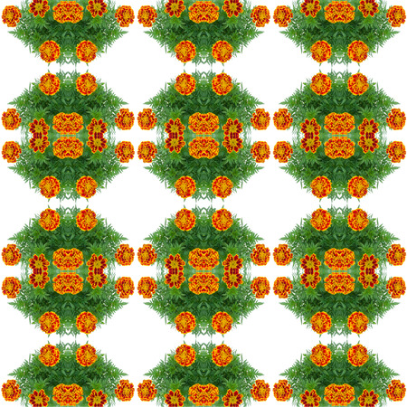 patula: french marigold seamless pattern background