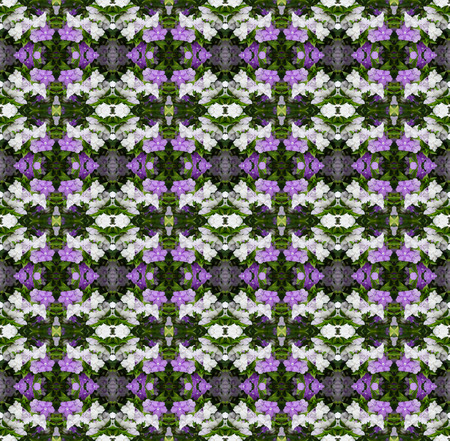 morning noon and night: Brunfelsia Australis (Yesterday today and tomorrow flower) seamless pattern background